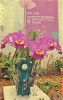 65週年校慶蘭喃自語蘭花展