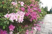 春之饗宴 校友26日返校餐敘淡水 蘭陽 同步舉行