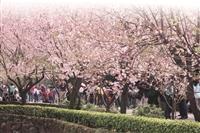 春遊,見識不一樣的淡水--天元宮