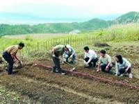 蘭陽開心農場,師生種菜休閒又健身。(圖�蘭陽校園提供)