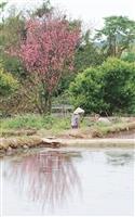 春遊,見識不一樣的淡水--三空泉