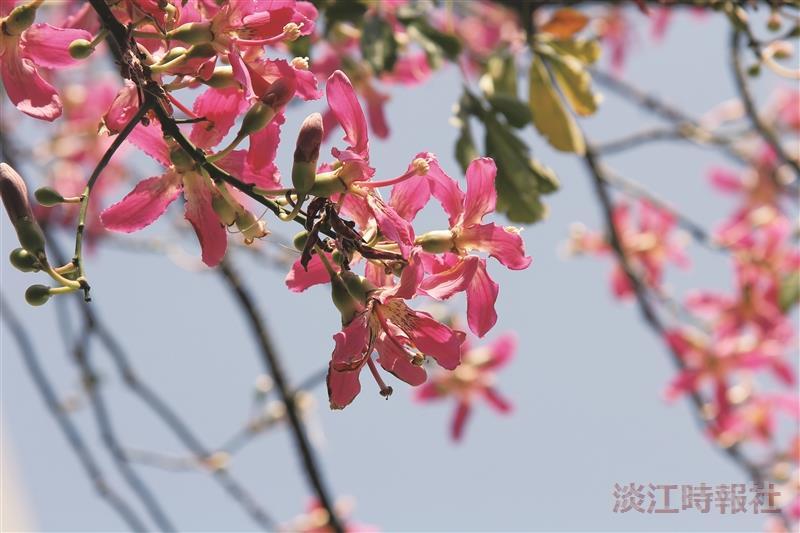 【花現校園】秋日美人