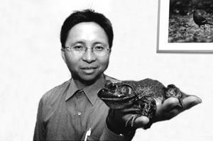 ↑企管系校友陳王時深為自然生態著迷,開吉普車、帶相機,上山下海跑遍全台,對台灣鳥類、蝴蝶、青蛙都瞭若指掌。自稱鳥名「帝雉」,象徵他對鳥類的鍾愛,現今轉而愛上研究蛙類,還養了牛蛙(上圖)和花狹口蛙,成了青蛙達人。 (洪翎凱攝影)