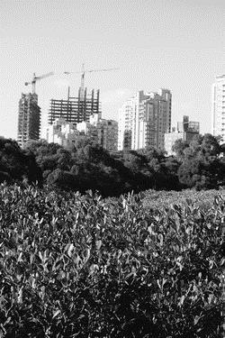 建築系學生拍攝紅樹林生態紀錄,對比生態保護區的美,及現代化開發對生態可能的破壞。(圖�建築系提供)