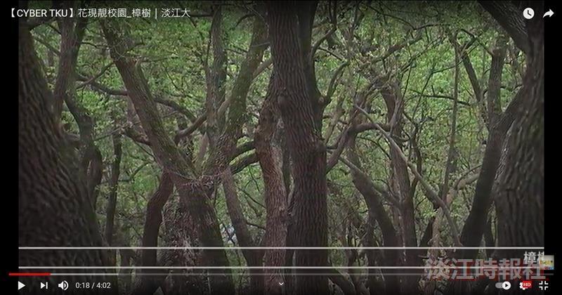 賽博頻道帶您一睹 氣勢幽貴 百蟲辟易的王者樟樹